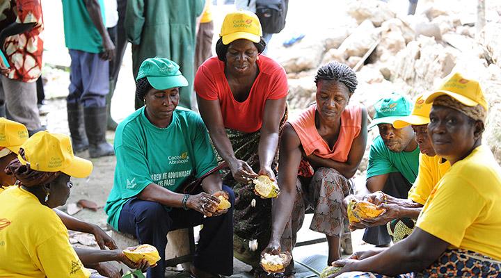 Woman working in Cocoa Farm in Ghana