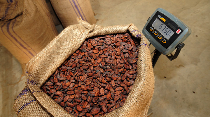 Weigh a bag of cocoa beans